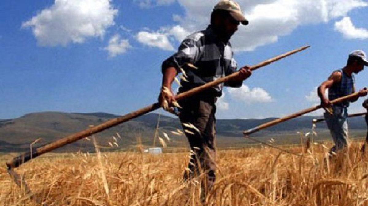 Türk çiftçisi 88 milyar dolarlık üretim yaptı