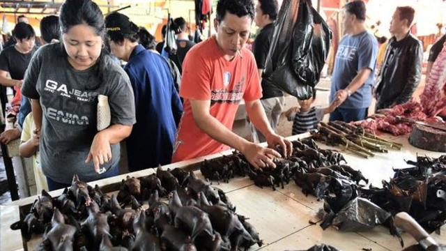 Çin'deki Vahşi Hayvan Pazarı İddiaları Yalan Çıktı!